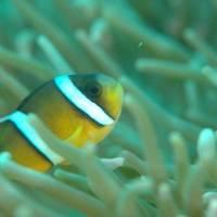 P-FISH 伊豆(城ヶ崎)体験ダイビング