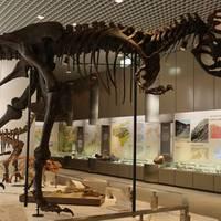 徳島県立博物館