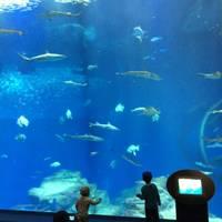 Kensuke  Saitoさんが撮った アクアワールド茨城県大洗水族館 の写真