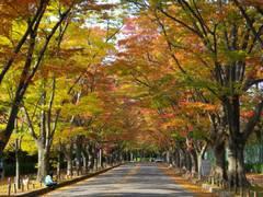京都の桜がみられる公園や観光スポット10選
