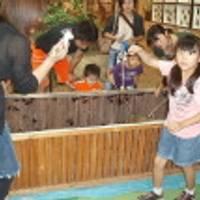 那須昆虫ワールド の写真 (2)