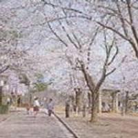 悠久山公園 の写真 (3)