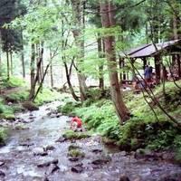 石川県県民の森