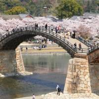 錦帯橋 の写真 (1)