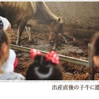 神津牧場 の写真 (1)