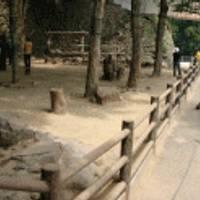 高崎山自然動物園 の写真 (3)