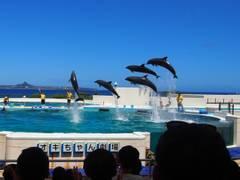 全国の人気水族館20選。電車で行ける子供が楽しいおすすめの有名水族館もご紹介。