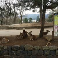 奈良公園 の写真 (3)