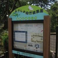 むさしの自然観察園(北町ビオトープ)