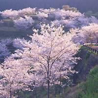 花立公園 の写真 (1)