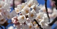 2020年九州の子どもと行けるお花見イベント10選