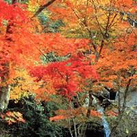 るり渓自然公園