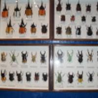 那須昆虫ワールド の写真 (3)