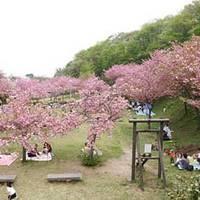 五智公園(ごちこうえん) の写真 (2)