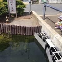 江川せせらぎ遊歩道 の写真 (2)