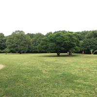 Kentaro Soharaさんが撮った 県立東高根森林公園 の写真