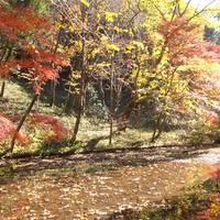 四季の森公園 の写真 (2)