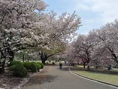 東京都内の定番お花見スポット10選
