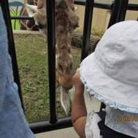 旭川市旭山動物園 の写真 (3)