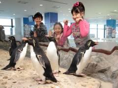 関西のおすすめ水族館10選!子供がよろこぶイベントも