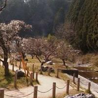 諏訪梅林公園