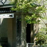 名和昆虫博物館 (なわこんちゅうはくぶつかん) の写真 (2)