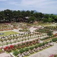 敷島公園 ばら園