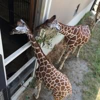 ムジカさんが撮った 京都市動物園 の写真