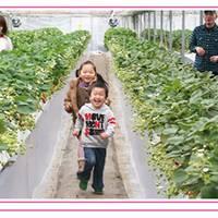 徳江いちご農園 の写真 (3)