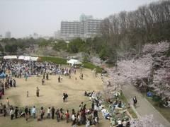 神戸子連れにおすすめの公園特集!人気の公園から穴場まで